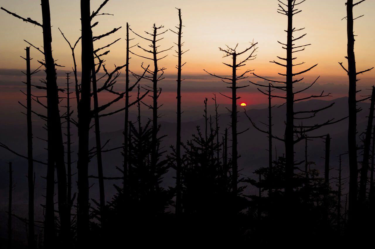 Mt LeConte Sunrise