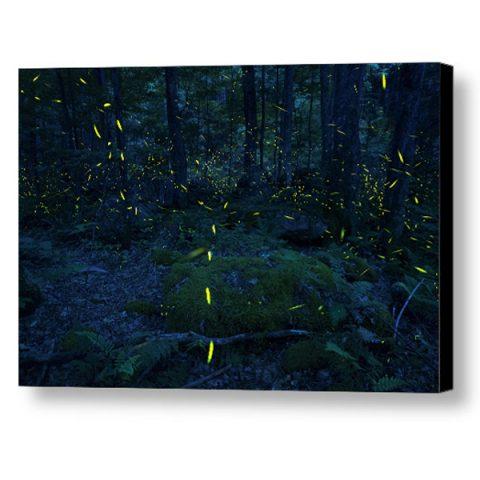 Elkmont Fireflies